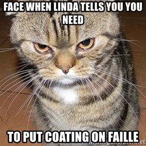 angry cat 2 - face when linda tells you you need to put coating on faille
