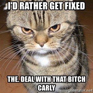 angry cat 2 - I'd Rather get fixed The. Deal with that bitch carly