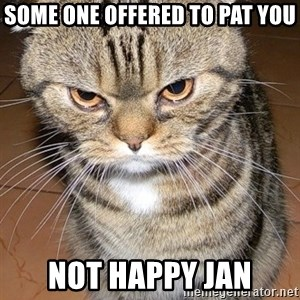 angry cat 2 - some one offered to pat you Not happy Jan