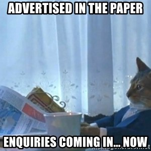 Sophisticated Cat - advertised in the paper enquiries coming in... now