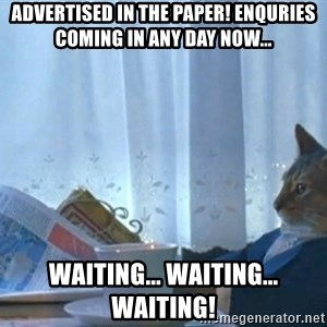 Sophisticated Cat - advertised in the paper! enquries coming in any day now... waiting... waiting... waiting!