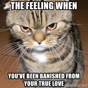 angry cat 2 - The feeling when you've been banished from your true love