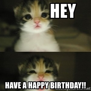 Adorable Kitten -            hey Have a HAPPY BIRTHDAY!!