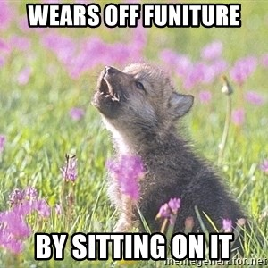 Baby Insanity Wolf - WEARS off funiture By sitting on it