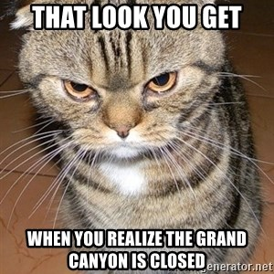 angry cat 2 - That look you get When you realize the grand canyon is closed