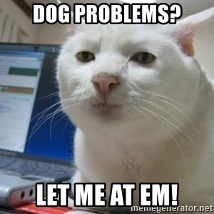 Serious Cat - Dog problems? Let me at em!