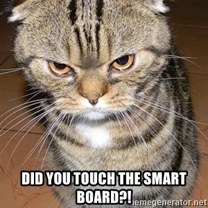 angry cat 2 -  DID YOU TOUCH THE SMART BOARD?!