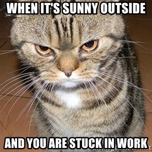 angry cat 2 - When it's sunny outside And you are stuck in work