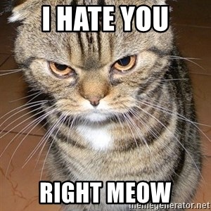 angry cat 2 - i hate you right meow