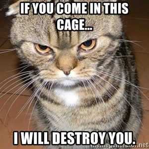angry cat 2 - if you come in this cage... i will destroy you.
