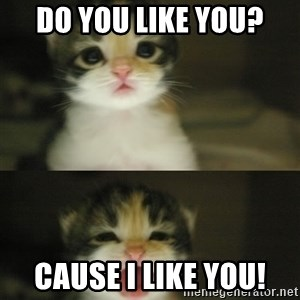 Adorable Kitten - Do you like you? Cause I like you!