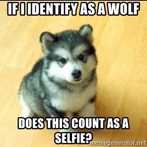 Baby Courage Wolf - IF I Identify as a Wolf Does this count as a selfie?