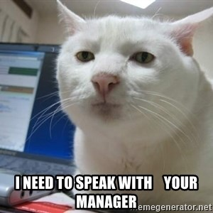 Serious Cat -  I NEED TO SPEAK WITH    YOUR MANAGER
