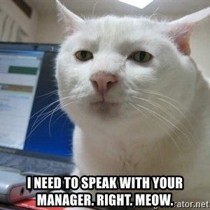 Serious Cat -  i need to speak with your manager. right. meow.