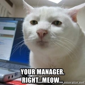 Serious Cat -  your manager. right...meow...