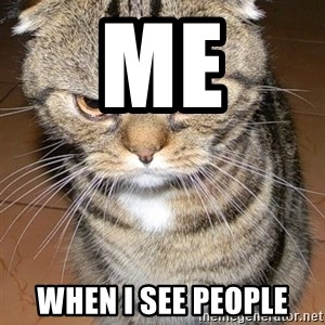 angry cat 2 - me when i see people