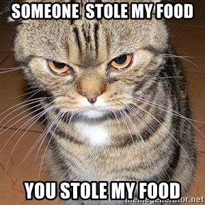 angry cat 2 - someone  stole my food you stole my food