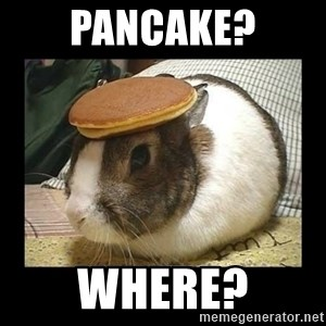 Bunny with Pancake on Head - pancake? where?