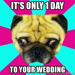 Perplexed Pug - It's only 1 day To your wedding