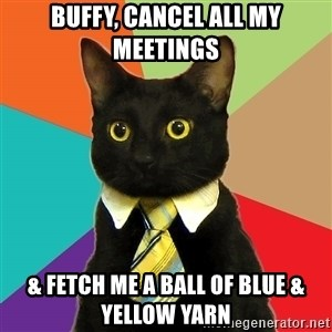 Business Cat - Buffy, cancel all my meetings & fetch me a ball of blue & yellow yarn