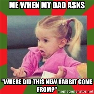 "dafuq girl - Me when my dad asks ""where did this new rabbit come from?"""