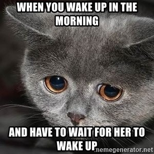 Sadcat - WHEN YOU WAKE UP IN THE MORNING AND HAVE TO WAIT FOR HER TO WAKE UP
