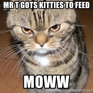 angry cat 2 - Mr T gots kitties to feed MOWW