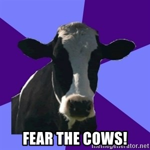 Coworker Cow -  Fear the cows!