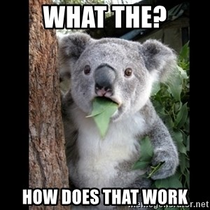 Koala can't believe it - What thE? How does that work