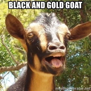 Illogical Goat - BLACK AND GOLD GOAT