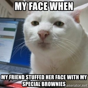 Serious Cat - my face when my friend stuffed her face with my special brownies