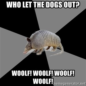 English Major Armadillo - who let the dogs out? WOOLF! woolf! woolf! woolf!