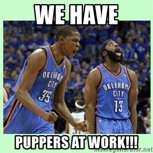 durant harden - we have puppers at work!!!