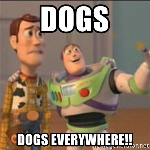 Buzz - Dogs Dogs everywhere!!