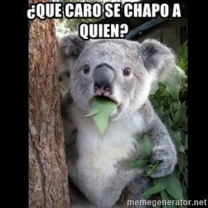 Koala can't believe it - ¿QUE CARO SE CHAPO A QUIEN?