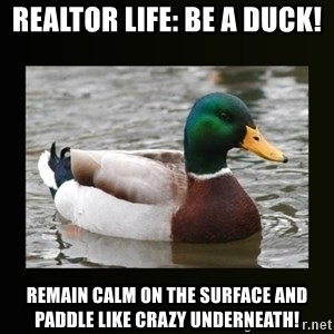 good advice duck - Realtor life: be a Duck! Remain calm on the surfacE and padDle like crazy underneath!