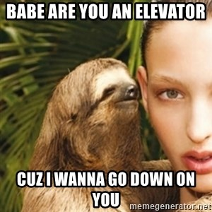 sexy sloth - Babe are you an elevator  cuz i wanna go down on you