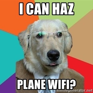 Business Dog - i can haz plane wifi?