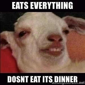10 goat - Eats everything Dosnt eat its dinner