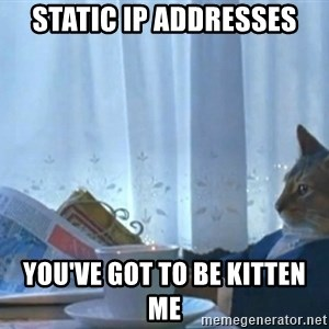 Sophisticated Cat - static ip addresses you've got to be kitten me