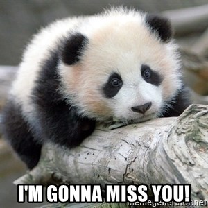 sad panda - I'm gonna miss you!