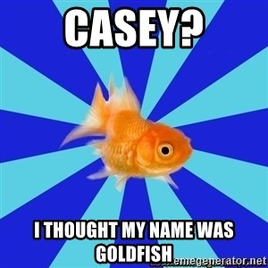 Absentminded Goldfish - Casey? I thought my name was goldfish