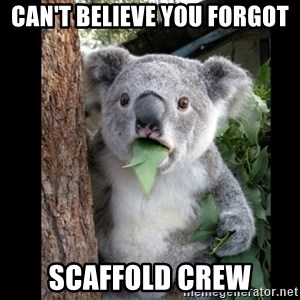 Koala can't believe it - Can't believe you forgot scaffold crew