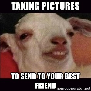 10 goat - taking pictures  to send to your best friend