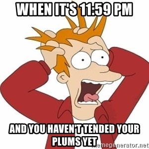 Fry Panic - When it's 11:59 pm And you haven't tended your plums yet