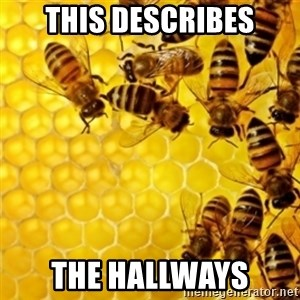 Honeybees - This describes The hallways