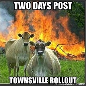 Evil Cows - two days post Townsville rollout