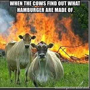 Evil Cows - When the cows find out what hamburger are made of
