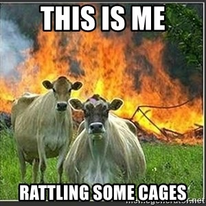 Evil Cows - this is me Rattling some cages