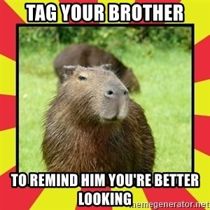 Handsome Capivara  - TAG YOUR BROTHER TO REMIND HIM YOU'RE BETTER LOOKING